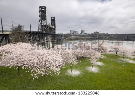 Cherry Blossoms Trees Along Willamette River by Steel Bridge in Portland Oregon at Springtime - stock photo