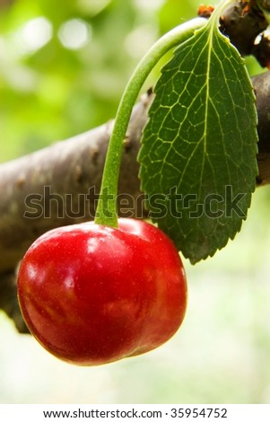 cherry object in natural place