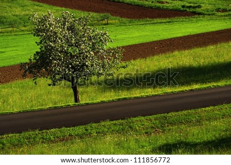 Cherry on the road - stock photo