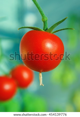 Cherry tomatoes macro closeup