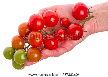 Cherry tomatoes on a palm isolated on white background  - stock photo