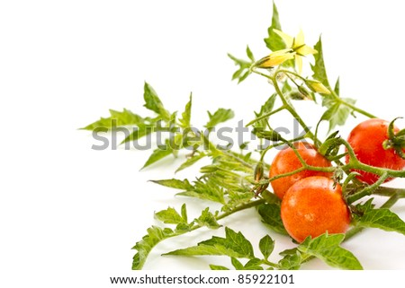 cherry tomatoes with leaves and flowers on a white background