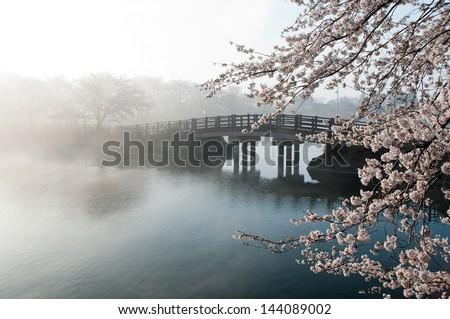 Cherry tree and bridge in the fog. - stock photo