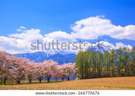 Cherry tree and Mt. Kaikomagatake, Yamanashi, Japan - stock photo
