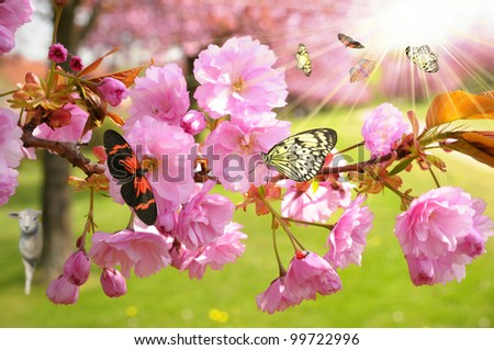 Cherry Tree with Butterflies in the sunshine - stock photo