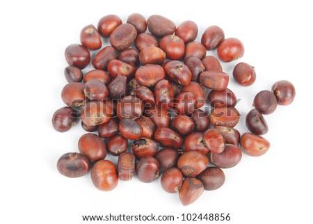 Chestnut - stock photo