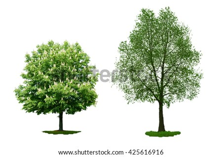 Chestnut and Willow White. Tree set. Isolated on white