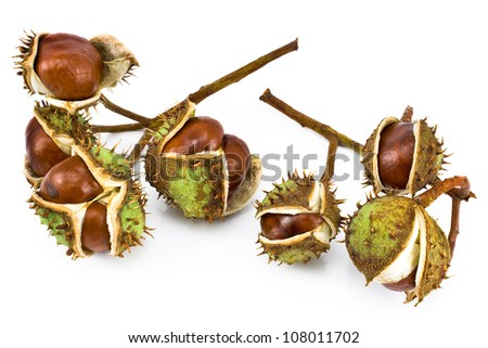 Chestnut berries isolated on white - stock photo
