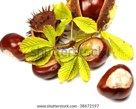 chestnut berries isolated on white
