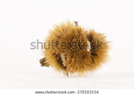 Chestnut burr on white bottom