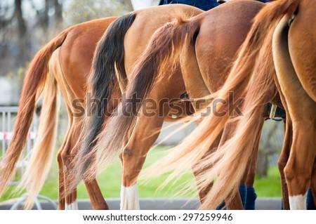 chestnut don horses tales closeup - stock photo