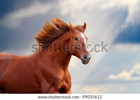chestnut horse - stock photo