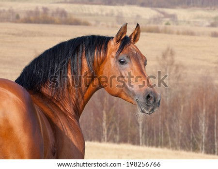 Chestnut horse head, autumn background. - stock photo