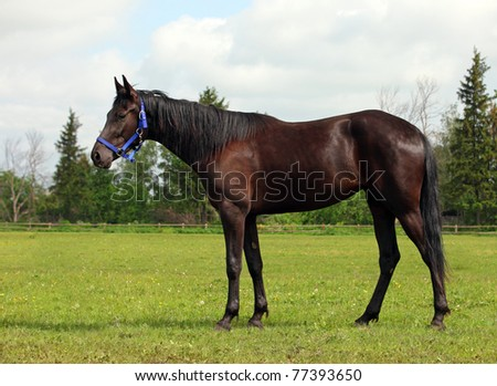 Chestnut horse in farm
