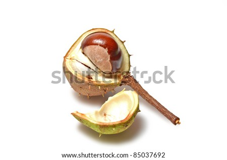 Chestnut in the shell - stock photo