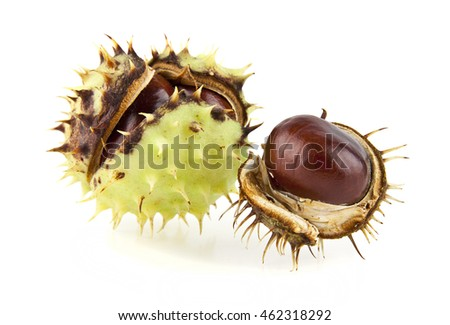 chestnut is isolated on a white background