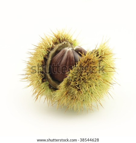 Chestnut, isolated on white - stock photo