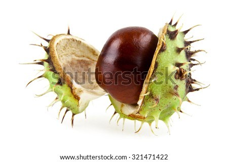 chestnut on a white background - stock photo