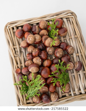 chestnut on wooden wicker basket with plants.