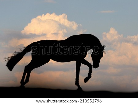 chestnut stallion runs - stock photo