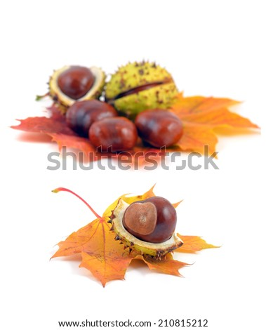 Chestnuts. Autumn leaves and chestnuts on white background. Chestnuts nuts. Chestnuts fruits. Chestnuts decoration. Chestnuts and leaves with copy space.chestnut with crust .