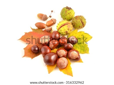 Chestnuts. Autumn leaves and chestnuts on white background. Chestnuts nuts. Chestnuts fruits. Chestnuts decoration. Chestnuts and leaves with copy space.chestnut with crust and acorn.  - stock photo
