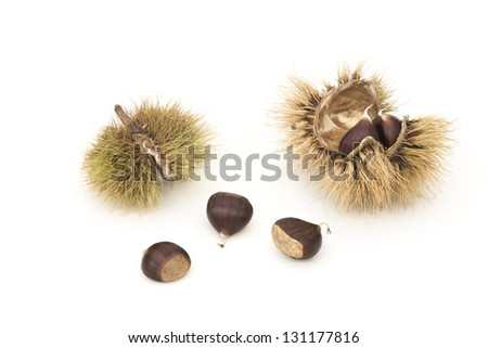 Chestnuts in and out of their husks. (Castanea) Isolated over white. - stock photo