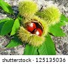 chestnuts leaf leaves - stock photo