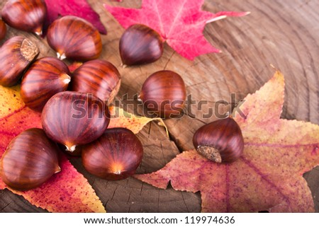 Chestnuts scattered on the stump - stock photo