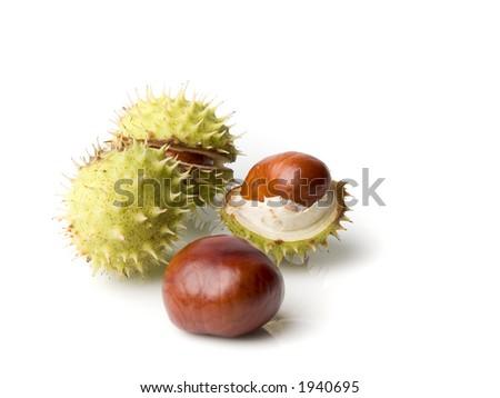 chestnuts shut oneself off on white background - stock photo
