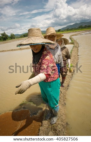 Chiang Mai province, Thailand,- July 2005: during the monsoon in july Women plant rice in the paddy fields  - stock photo