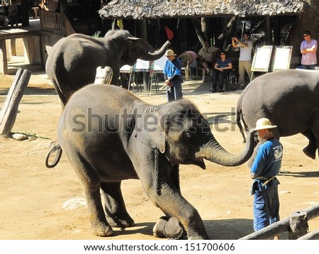 CHIANG MAI, THAILAND - DEC. 12: Daily elephant show at The Thai Elephant Conservation Center, mahout show how to ride and transport in forest, December 12, 2011 in Chiang Mai, Thailand.  - stock photo