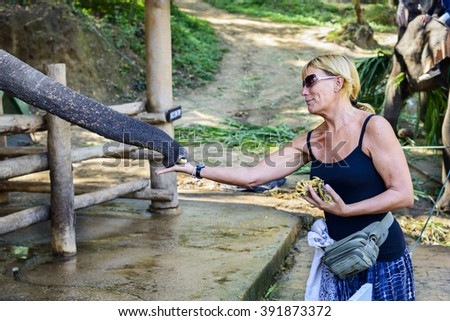 Chiang Mai, Thailand - November 30, 2015:  Tourist feed elephants at Maesa Elephant Camp. Located in Chiang Mai, Thailand.