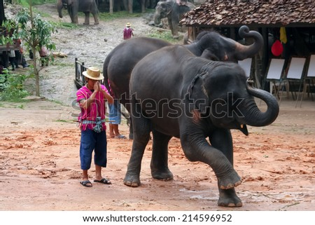 CHIANGMAI, THAILAND-AUGUST 12 2008 : elephant show at maesa elephant camp. Maerim district, chiangmai, thailand.