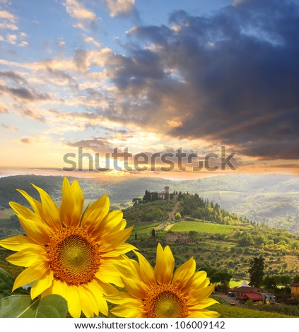Chianti vineyard landscape with sunflowers in Tuscany, Italy - stock photo
