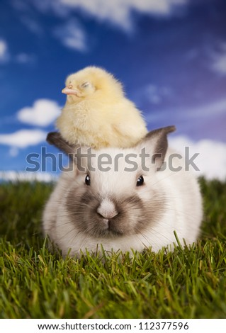 Chick in bunny - stock photo