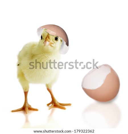 Chick out of the Egg