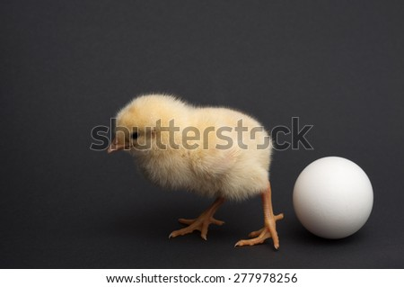 chick standing near to egg. isolated on black background - stock photo