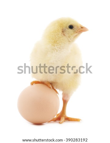 Chicken and egg isolated on a white background.