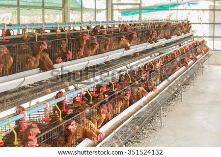 chicken and farms - stock photo