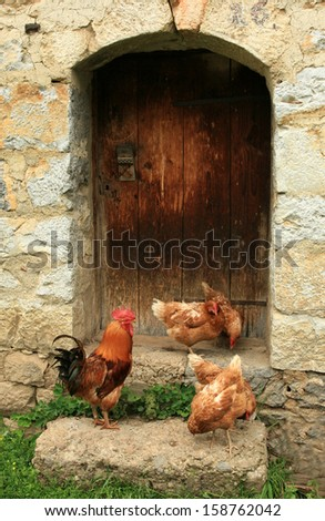 chicken and rooster on wooden door - stock photo