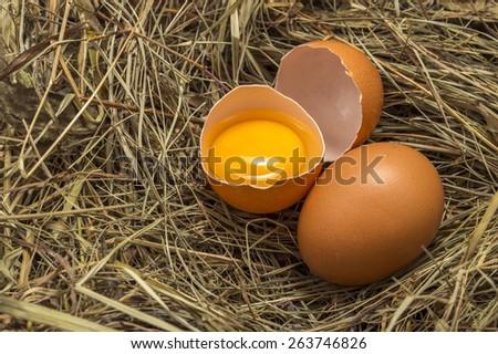 Chicken egg yolk in the nest - stock photo
