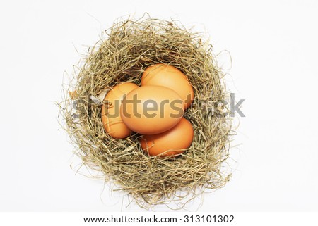 Chicken Eggs in nest on white background