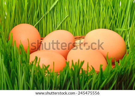 chicken eggs in the green grass background - stock photo