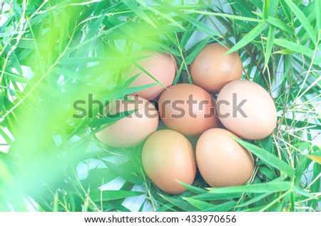 chicken eggs on bamboo leaves