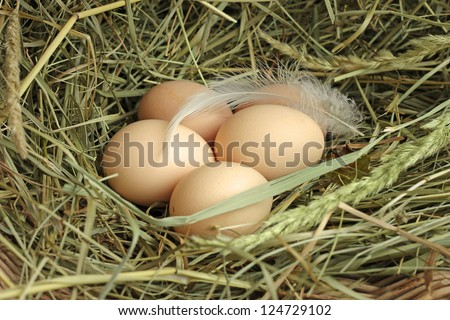 Chicken laying egg close up - photo#22