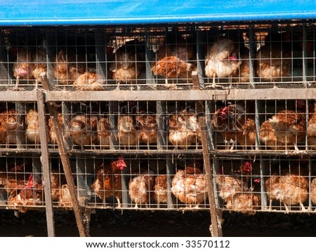 Chicken farm in countryside Taiwan - stock photo