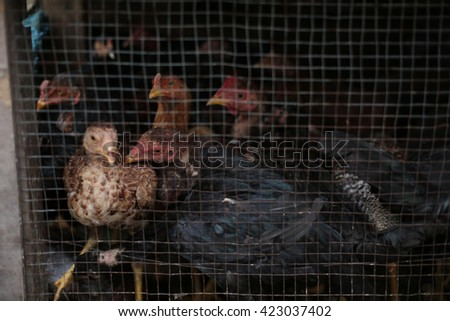 Chicken for sell - stock photo
