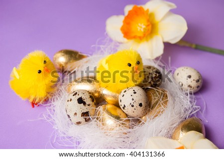 chicken in the nest and narcissus on a purple background