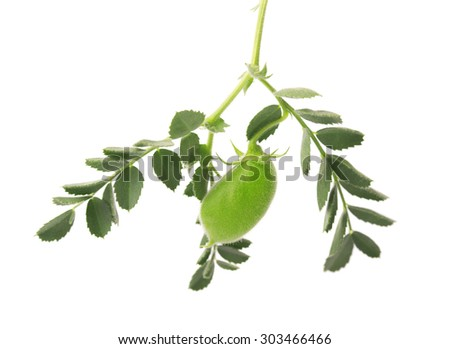 Chickpeas green on the branch - stock photo